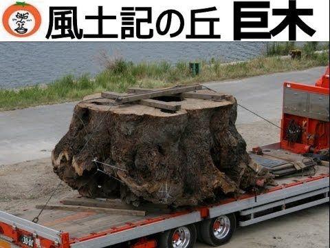 【 うろうろ和歌山 】 河西運輸 古墳時代 巨木 移送 六十谷 ~ 紀伊風土記の丘 transportation of old big tree...