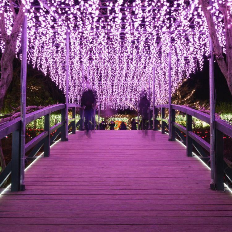 Ashikaga Flower Park In 2020 Ashikaga White Flowers Japanese Garden
