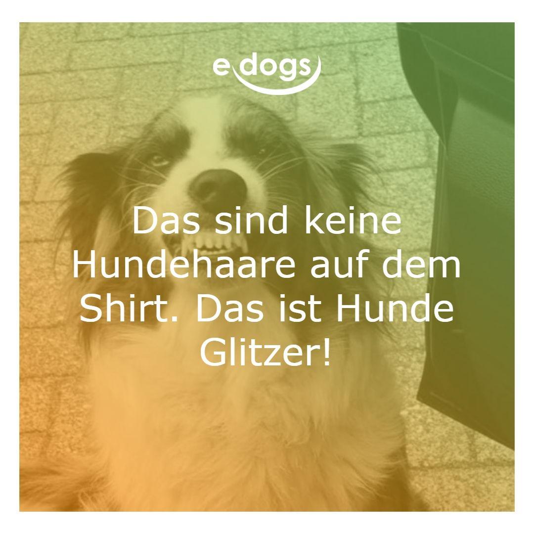 finde deinen traumhund auf edogs.de! - hundeliebe - hunde