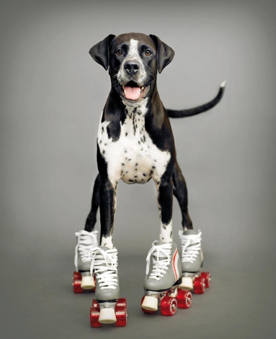 Roller skating new zealand - Dog Owners Turning To Professionals For Pup Portraits Roller Skatingroller