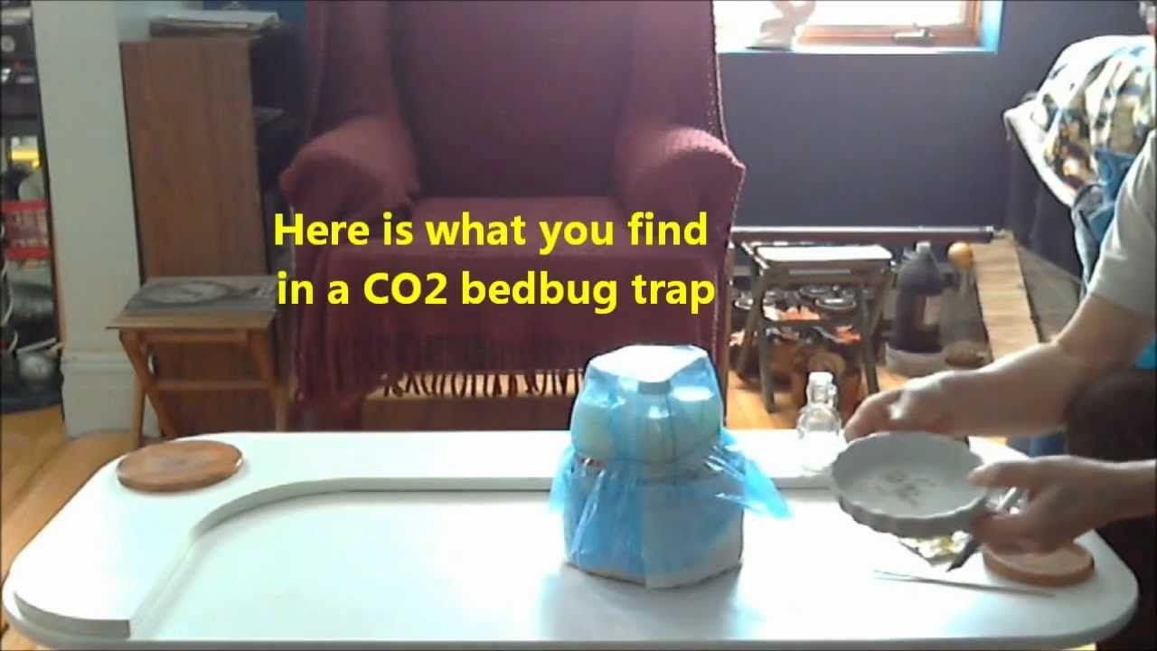 Co2 bedbug trap making co2 bed bugs