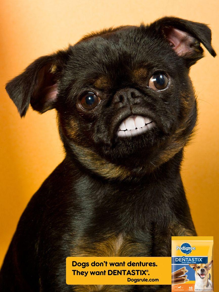 Doggy Dentures Pugs Doggy Cute Animals