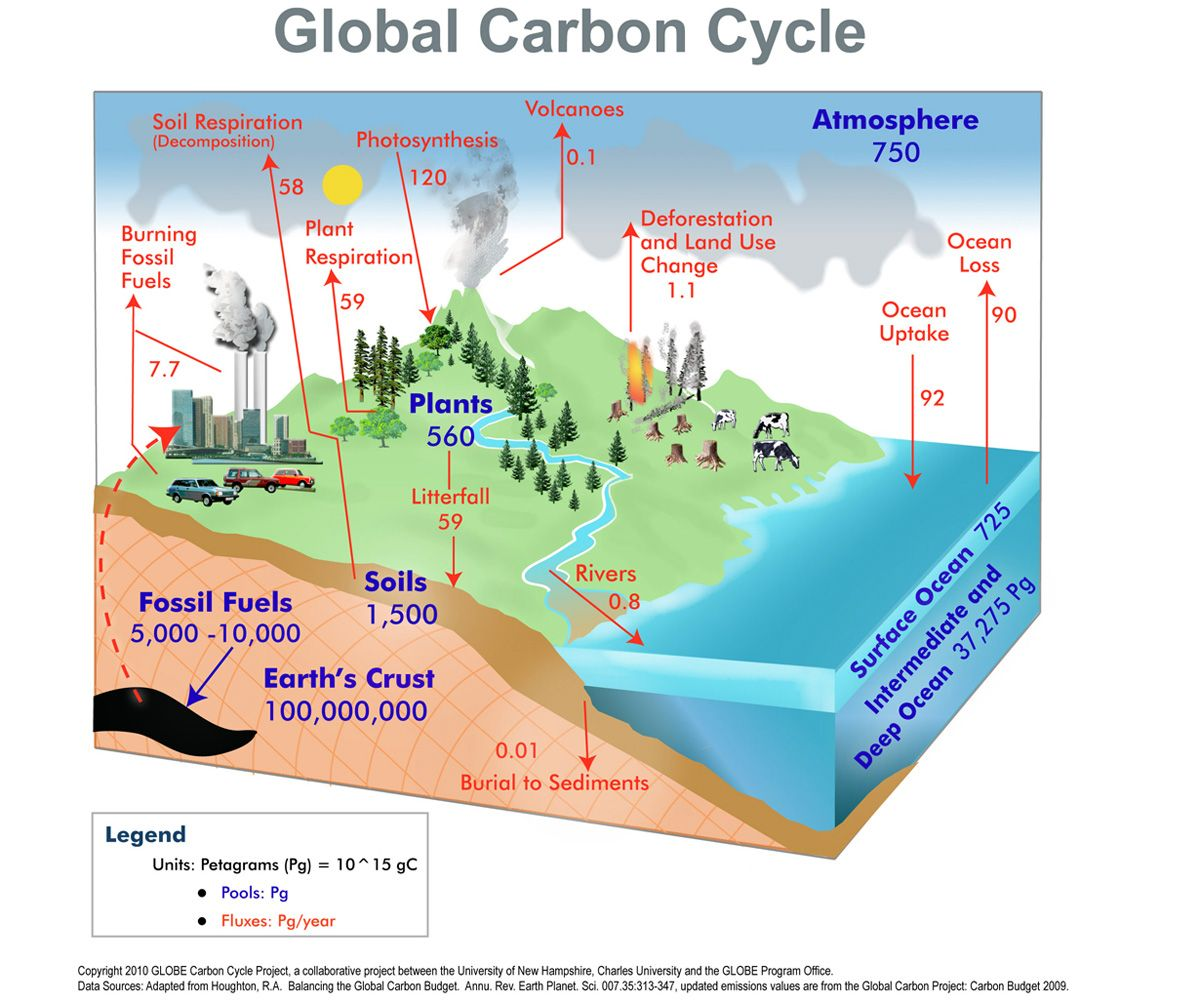 global carbon cycle life science teaching science carbon cycle carbon footprint life [ 1200 x 1003 Pixel ]