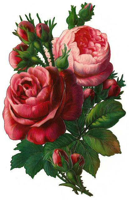 vintage rose clip art, vintage rose decoupage