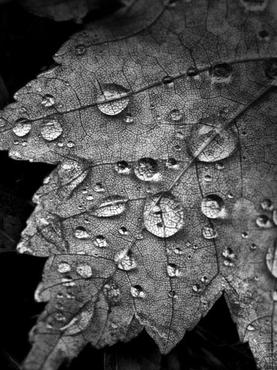 Does anyone know the credit for this photo black and white photography pinterest water droplets photography and learn photography