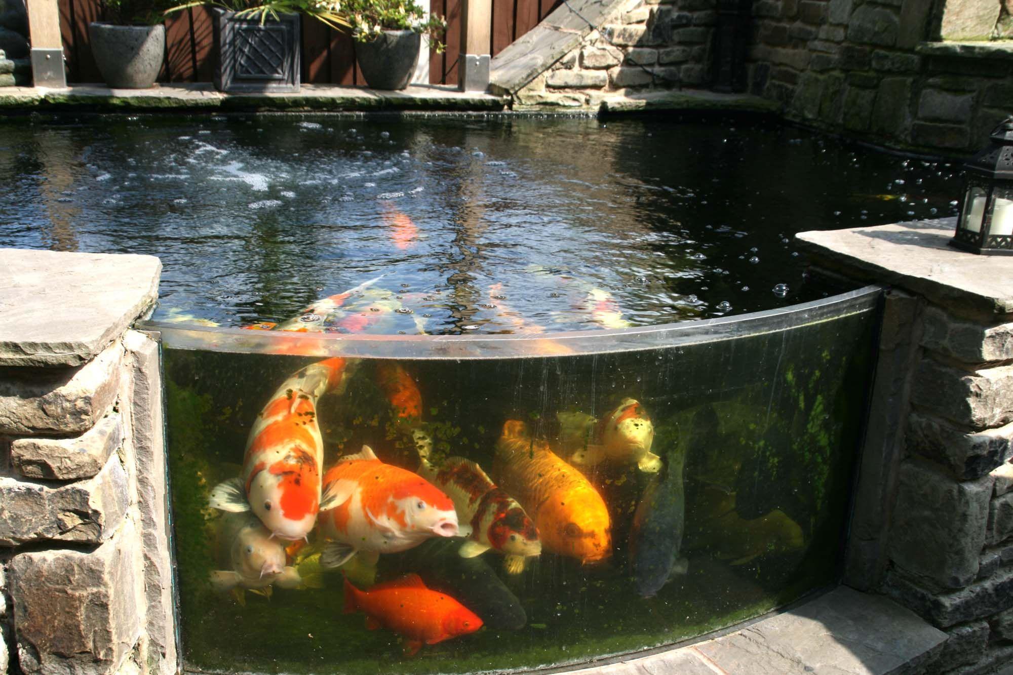 Tom&Gill Aquariums Pinterest