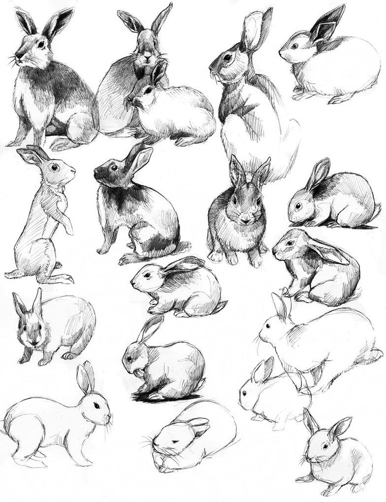 Basic Shapes In Various Positions To Show How To Make Different Poses  For Rabbit Drawingrabbit