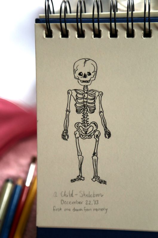 A scribble I did for illustration practice. #anatomy #obviouslydesigned #creation #skeleton
