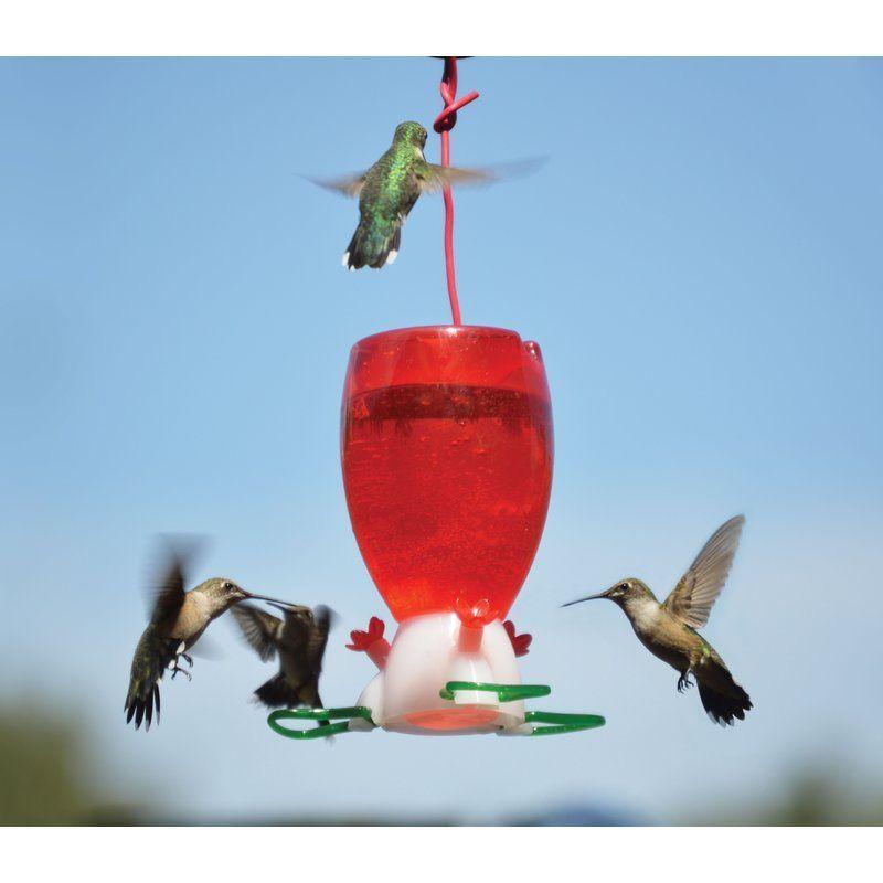 Songbird Essentials Hummingbird Feeder Wayfair 24 99 Hummingbirds With Images Humming Bird Feeders Red Hummingbird Glass Hummingbird Feeders