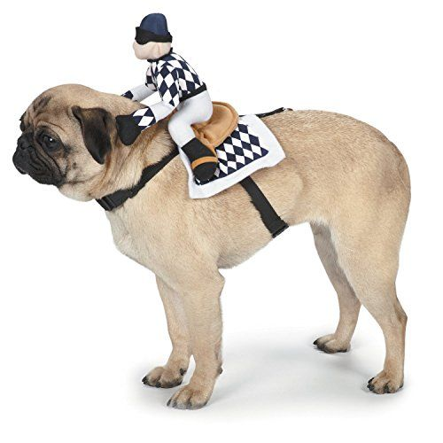 Zack Zoey Show Jockey Saddle Dog Costume Small You Can Get