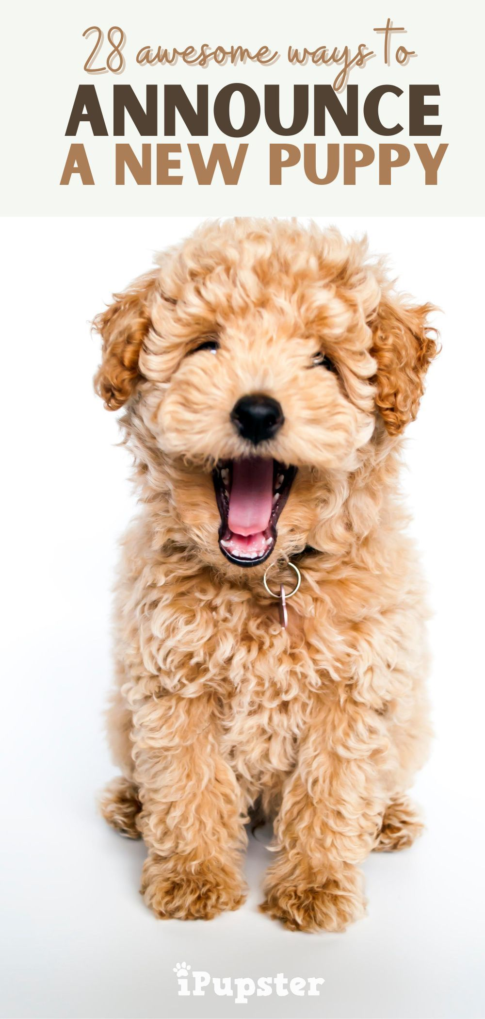 28 awwinspiring puppy announcement ideas in 2020 puppy