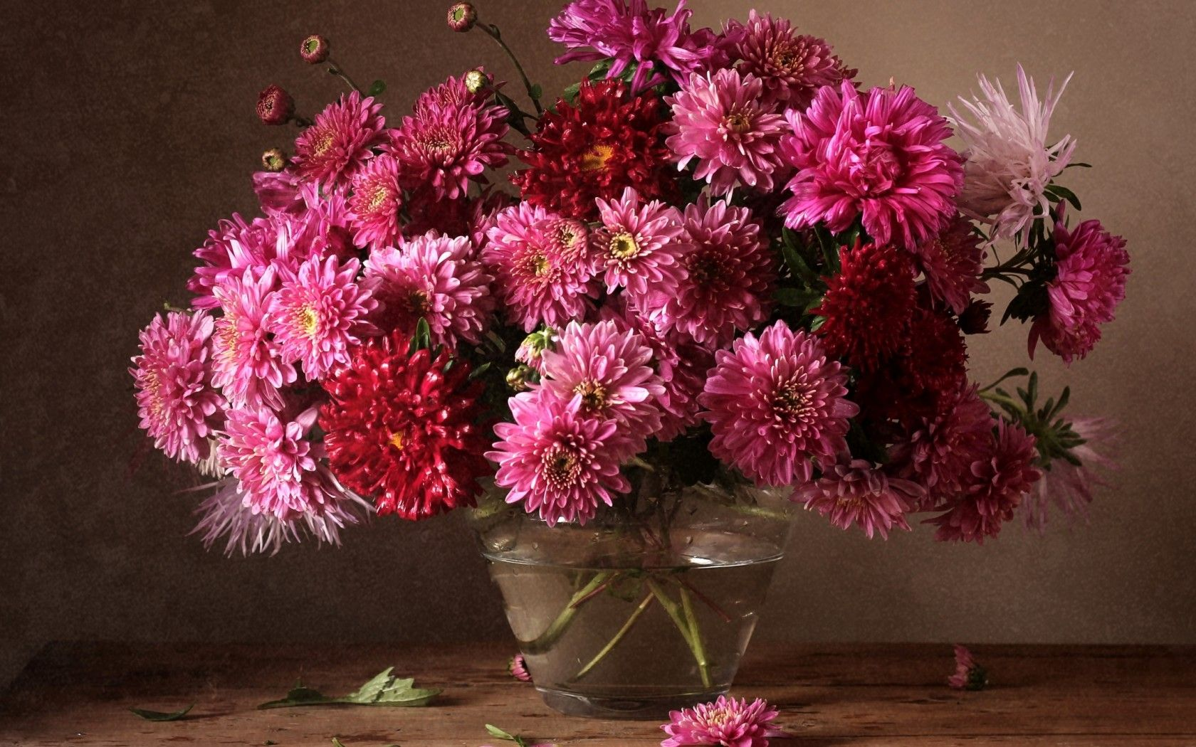 Поздравления с днем рождения с цветами хризантемами