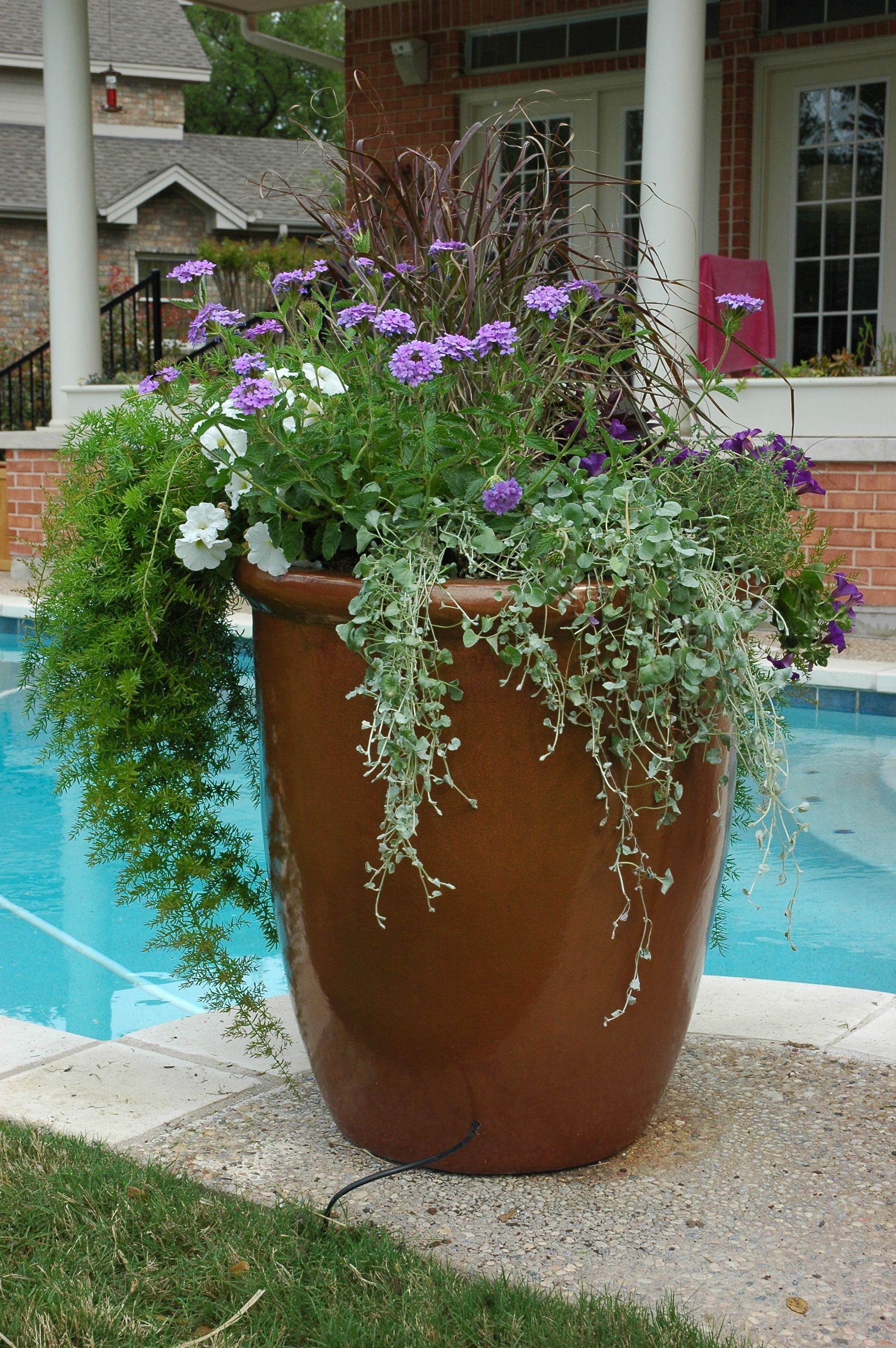 Mixed Annual Planter. Garden DesignBirminghamPlantersHerb ...