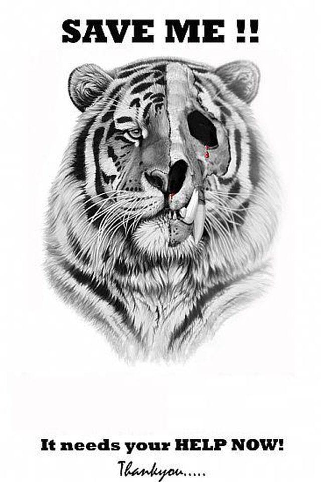 Petition Save Endangered White Tigers Tiger Drawing Tiger Art Wildlife Art