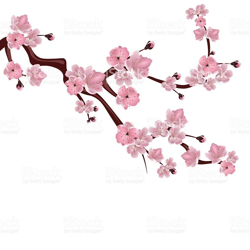 Japanese Cherry Blossom Illustration Blossom Clipart Pink Blossom Pencil And In Color Japanese Cherry Tree Cherry Blossoms Illustration Wildflower Drawing