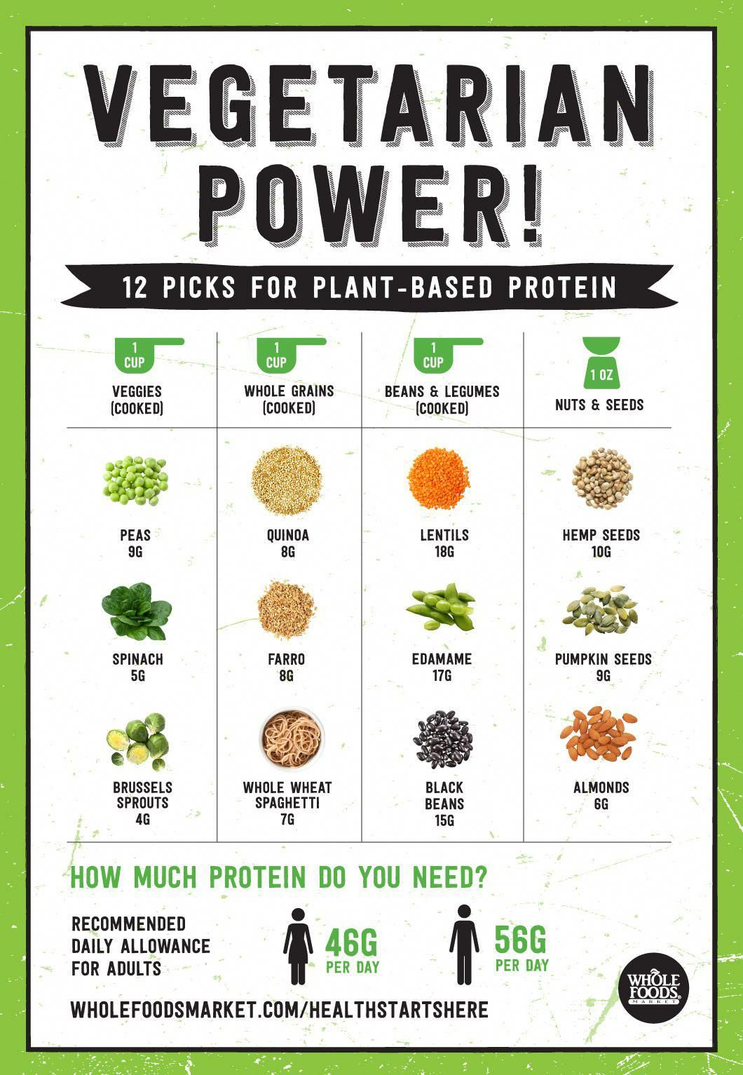 Best plant protein options