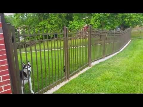 Best fencing option for digging dog