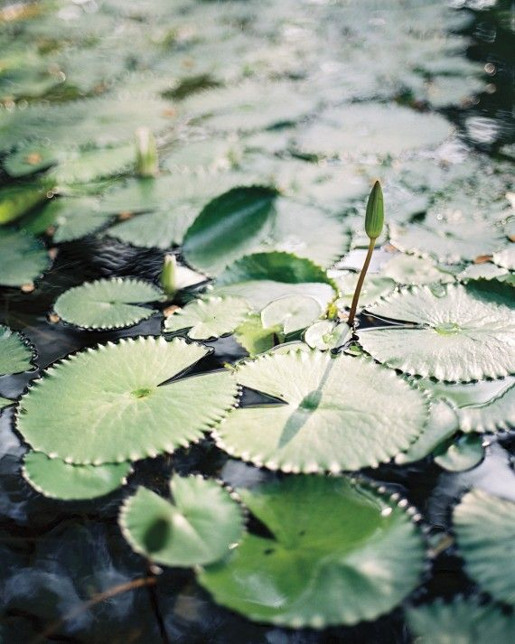 "Lotus plants, Balinese symbols of grace, filled two pools at Amanusa. The bride's advice to other couples thinking about planning a destination wedding? ""If you have a destination wedding, embrace the culture,"" says Jaime. ""Treat your guests to a different experience."""