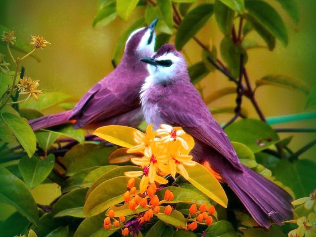 purple birds, animals, birds, colors, couple, flowers, nice