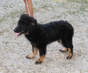 Adopt Kasey On German Shepherd Dogs Collie Mix Shepherd Dog