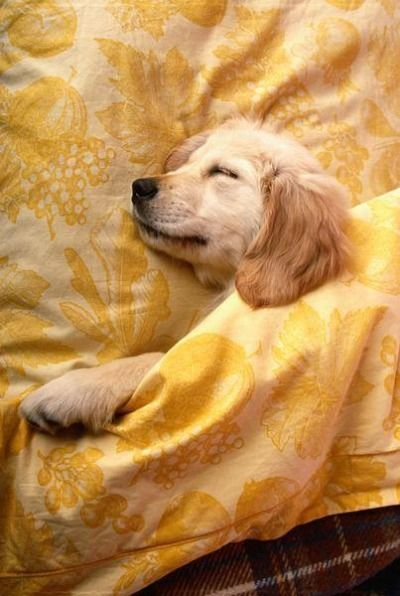 A Quieter Storm Sleeping Dogs Puppies Baby Animals