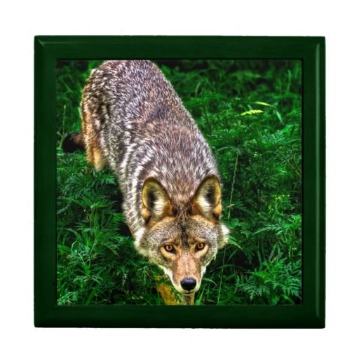 Coyote Keepsake Box
