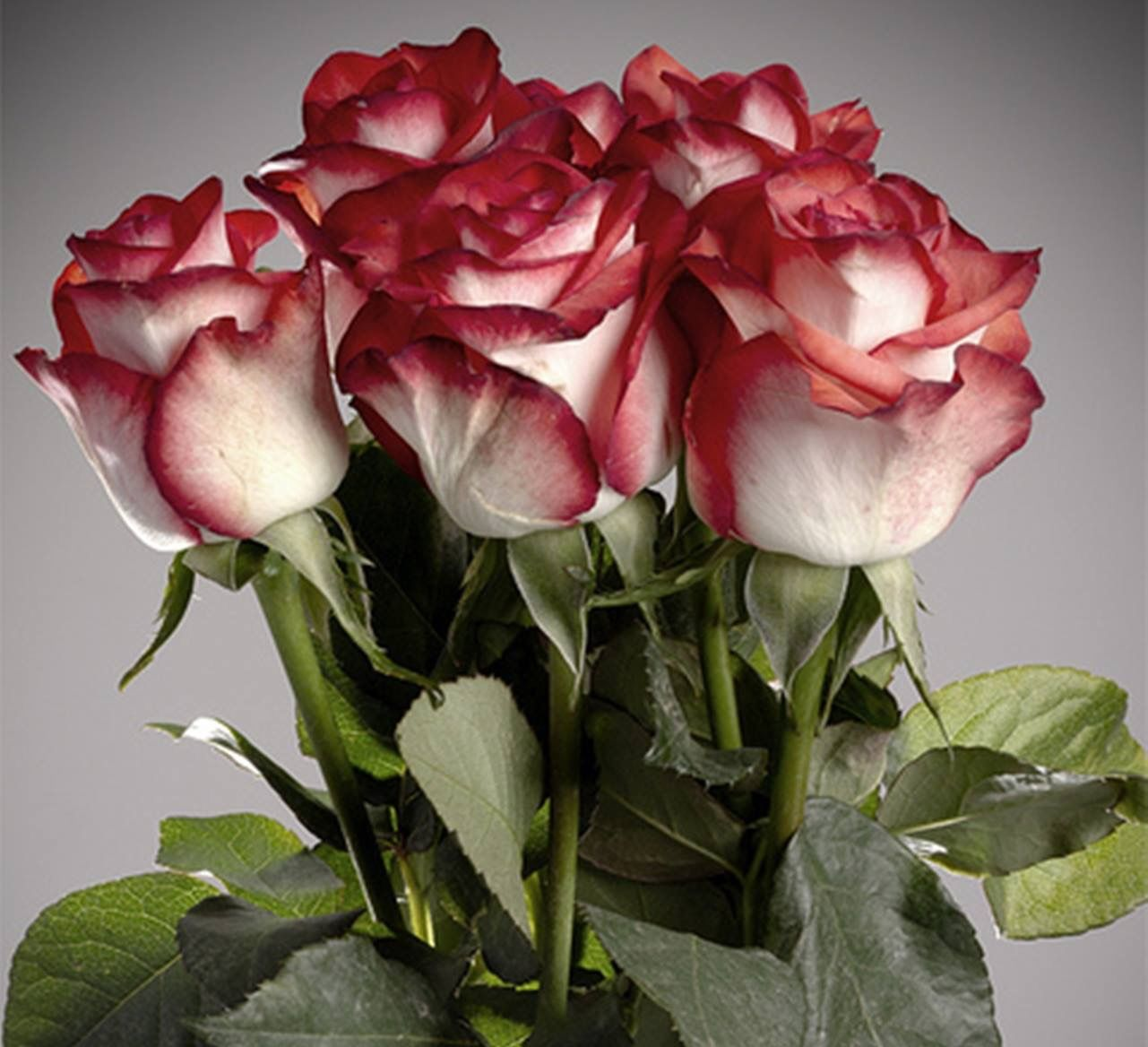 Pin by encarni on flores pinterest flowers beautiful flowers roses with love izmirmasajfo