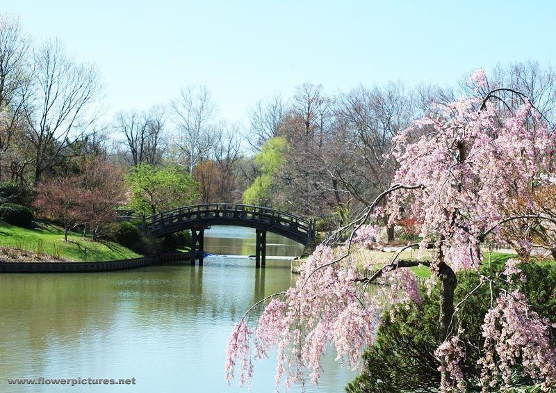 Missouri Botanical Garden. Every Japanese garden has a