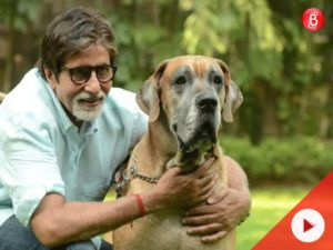 Watch Amitabh Bachchan And His Pet Dog Redefine The Meaning Of
