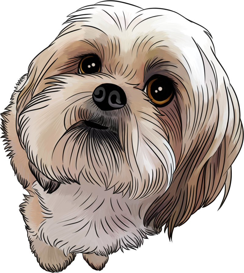I Bought 25 Gigs On Fiverr In Shih Tzu Cartoon Drawing Collection