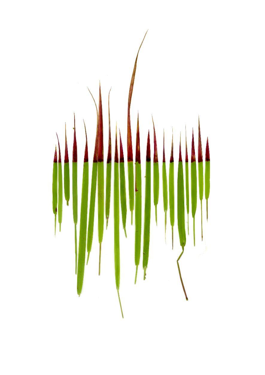 Anne Geene | Grass (2016) | digital print | 30 x 42 cm | Ed. 8