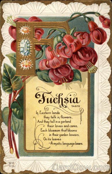 Letter F - Fuchsia - Nash Flower alphabet postcard Fuchsia