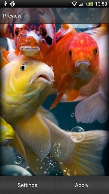 10 Best Apps For Koi Fish Live Wallpaper Android Appcrawlr Koi Fish Live Wallpapers Underwater Wallpaper