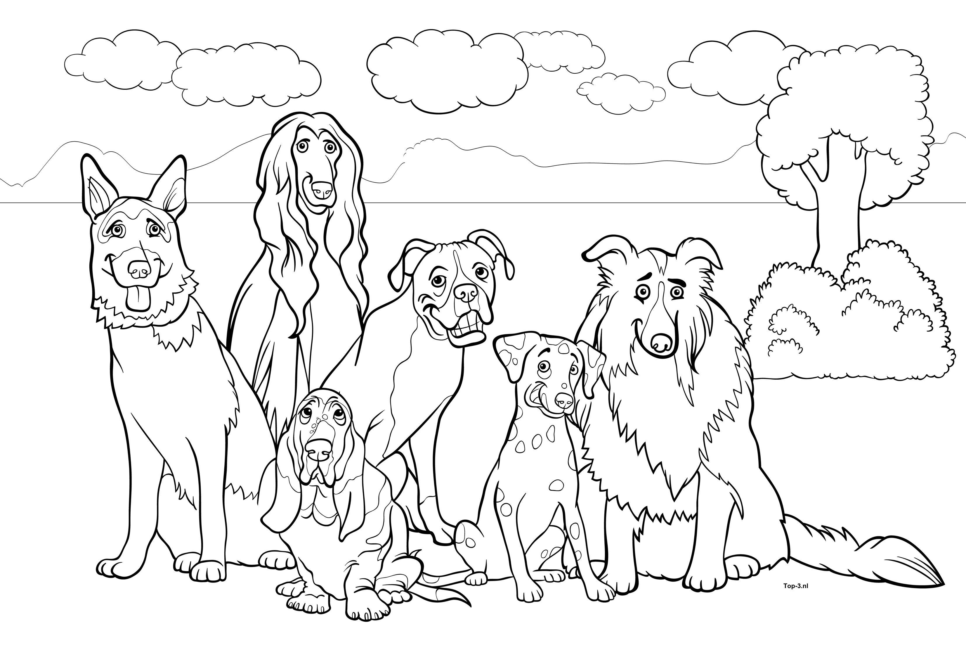 kleurplaat honden top 3 kado en feesttips kleurplaten