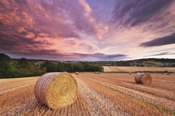 Summer Field Rolls Hay Straw Sky Clouds Evening