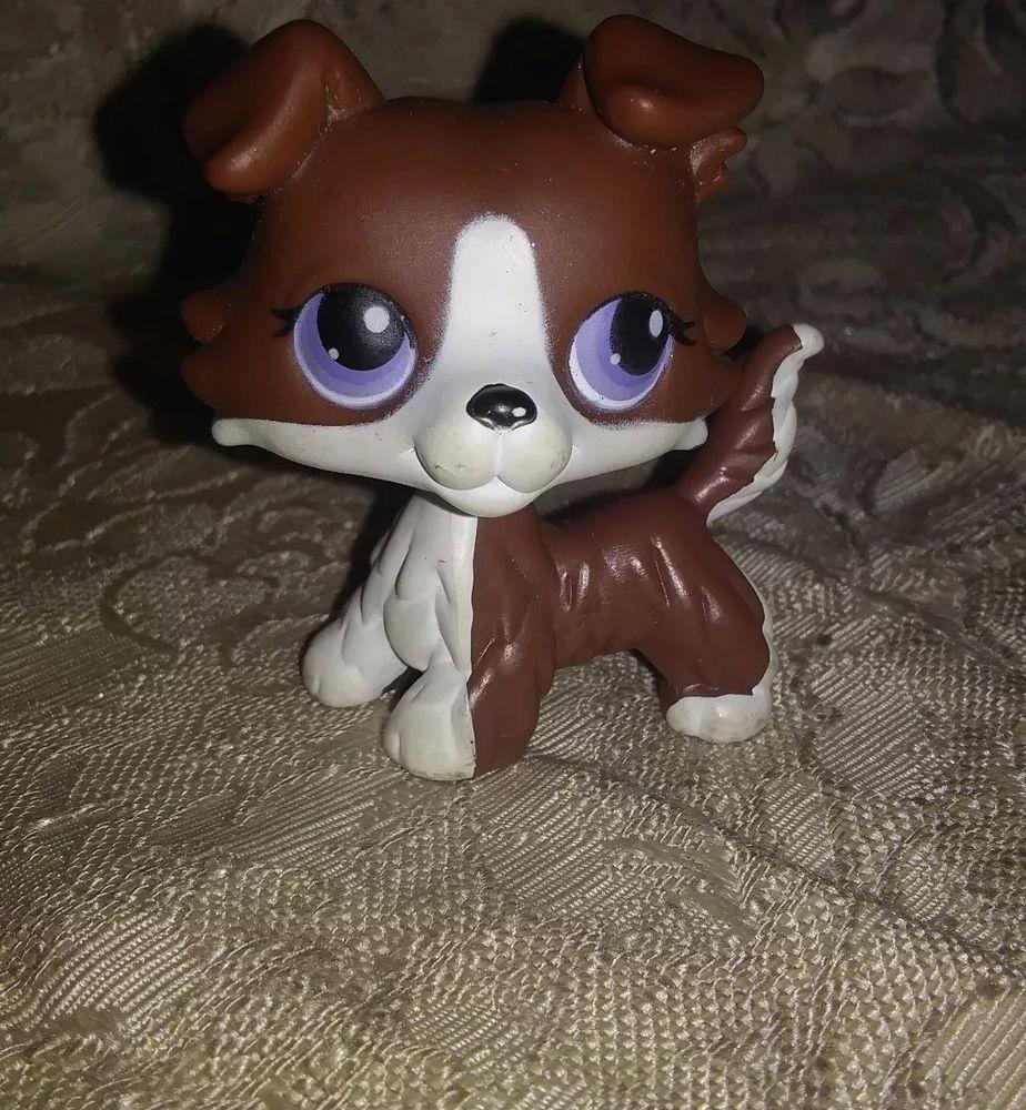 Littlest Pet Shop No Number Dark Brown White Collie Dog With