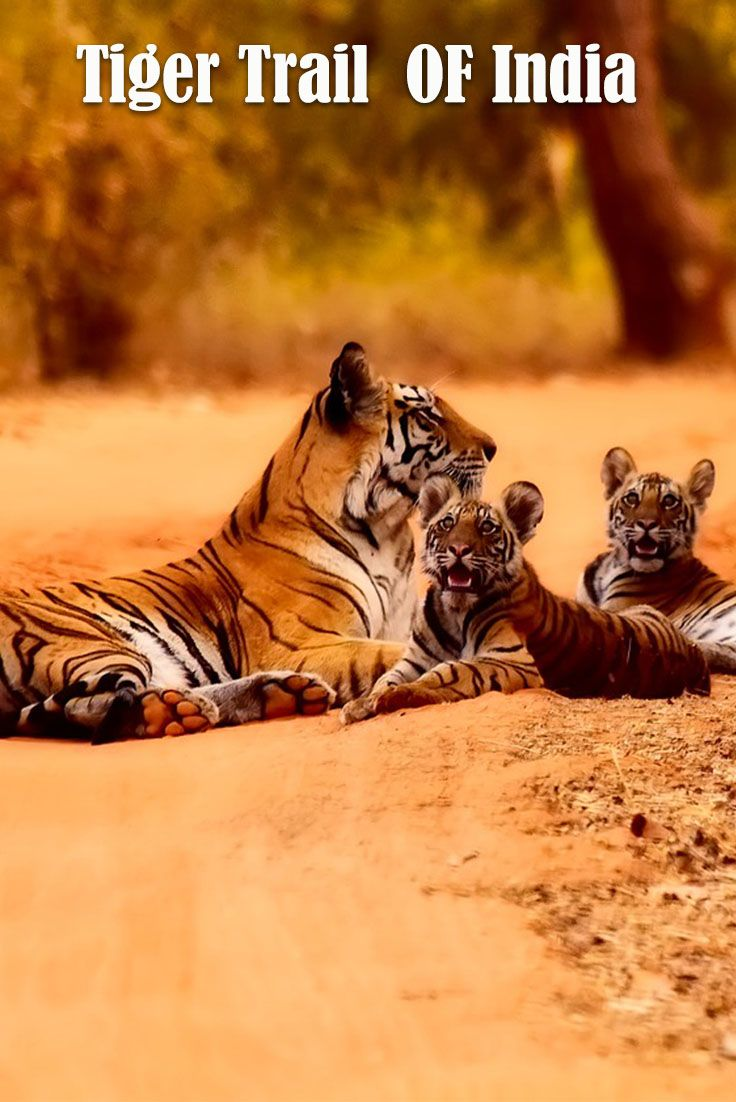Appealing Bookatiger De Photo Of Book A Tiger Safari In Gallery With