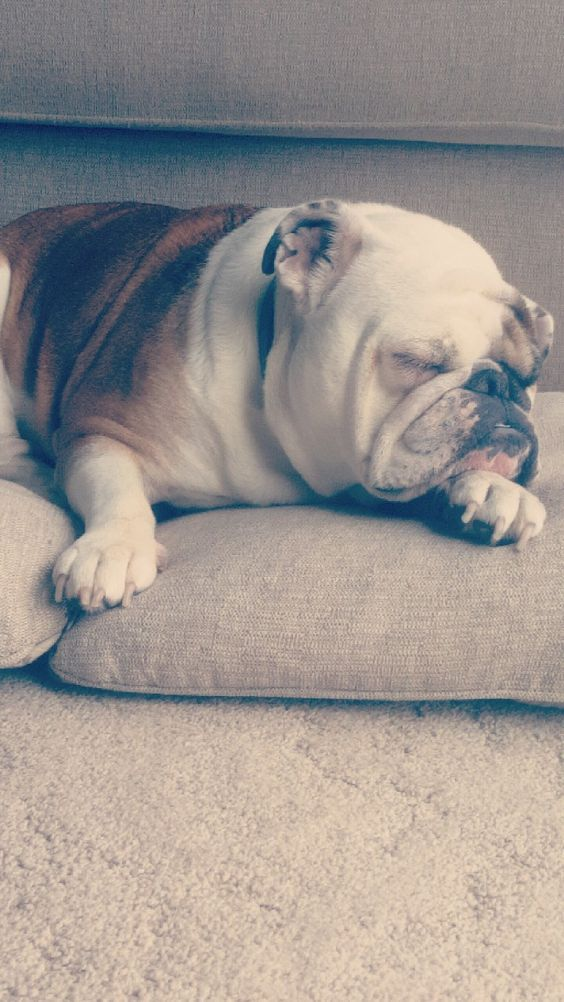 5 Easy Natural Ways To Ease Your Dog S Arthritis Sleeping Dogs