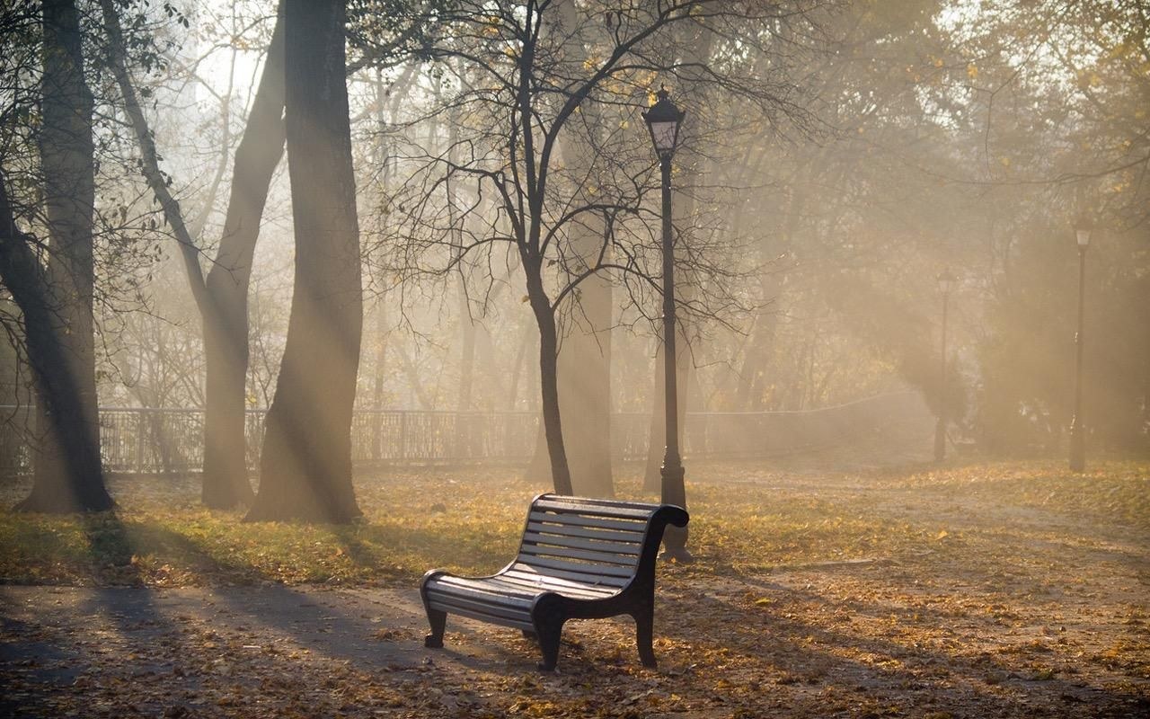 клоповника картинки скамейка и дождь уже догадались