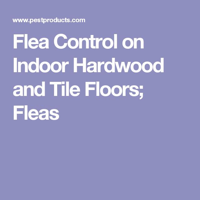 Flea Control On Indoor Hardwood And Tile Floors Fleas Home