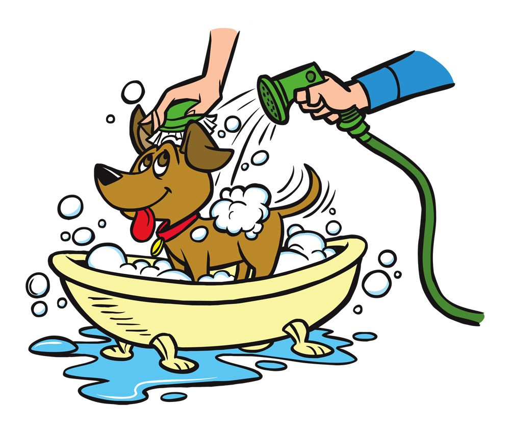 Park Art|My WordPress Blog_Can You Use Dog Shampoo On Cats Reddit