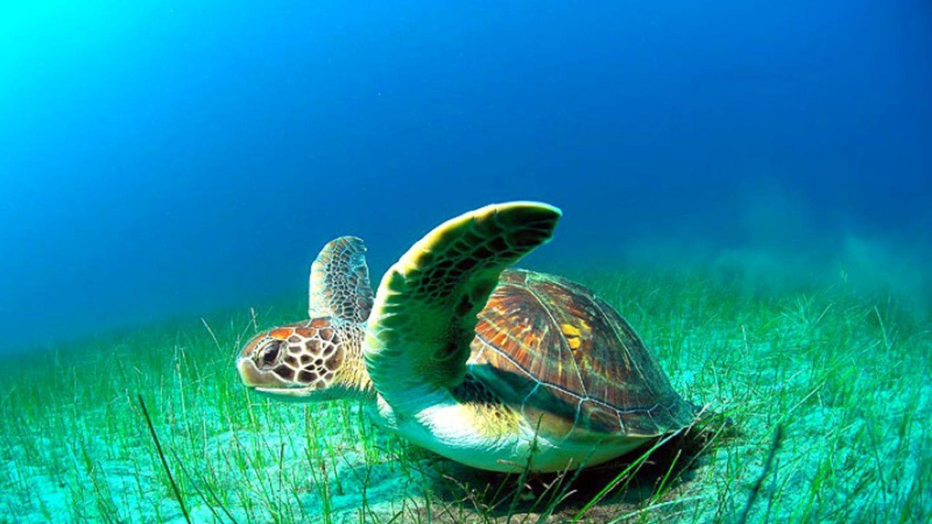 tortuga marina wallpapers - Buscar con Google