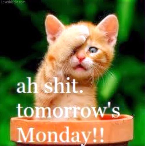 Tomorrows Monday Tomorrow Is Monday Monday Humor Funny Pictures
