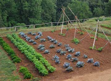 17 Best images about vegetable gardens on Pinterest Gardens