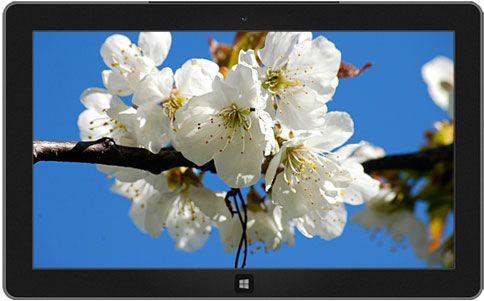 Czech Spring Theme Microsoft Windows White Cherry Blossom Buy Plants Online Bloom