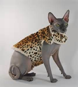 cat clothes - My Yahoo Canada Image Search Results ...