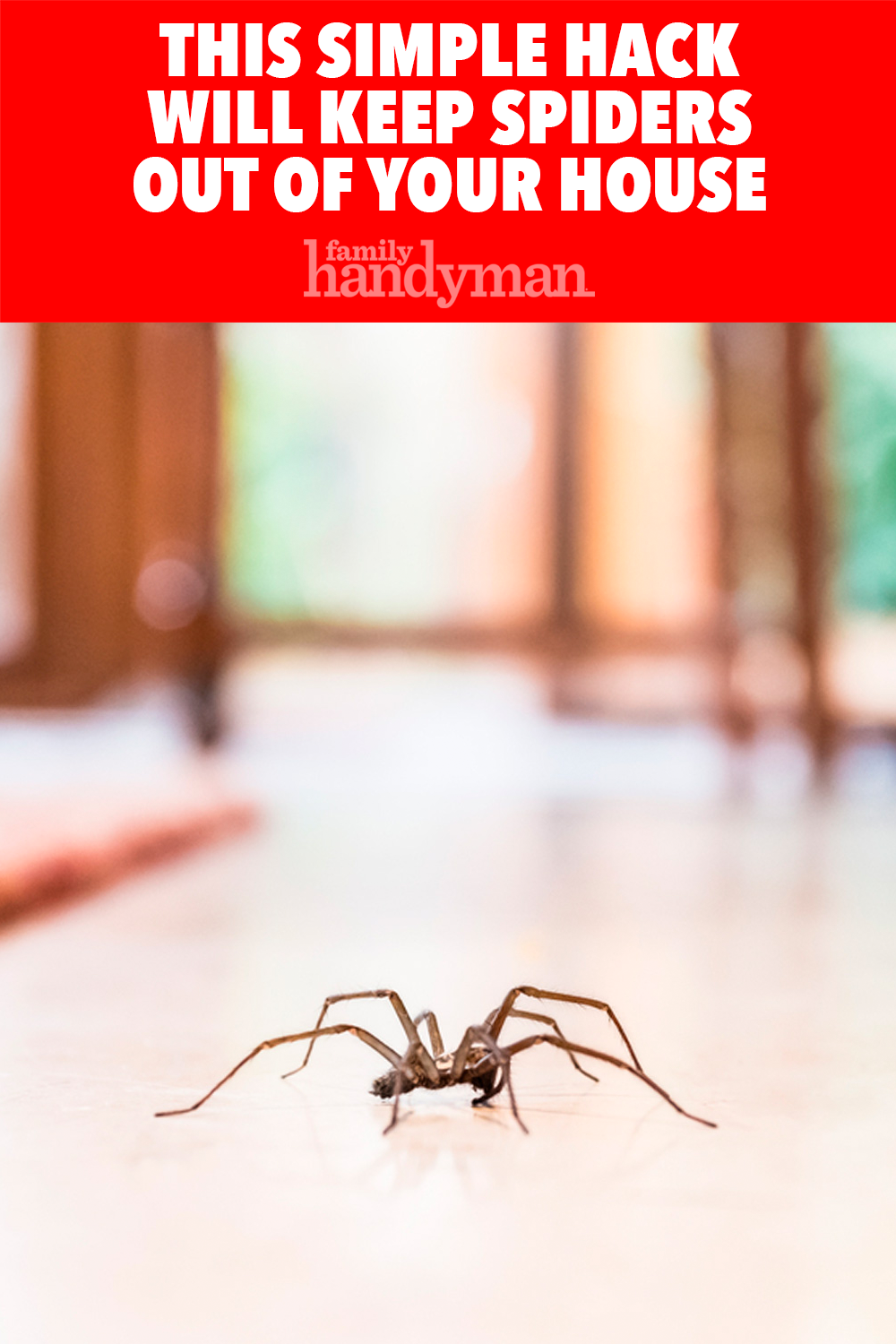 This Simple Hack Will Keep Spiders Out Of Your House Get Rid Of Spiders Simple Tricks How To Get Rid