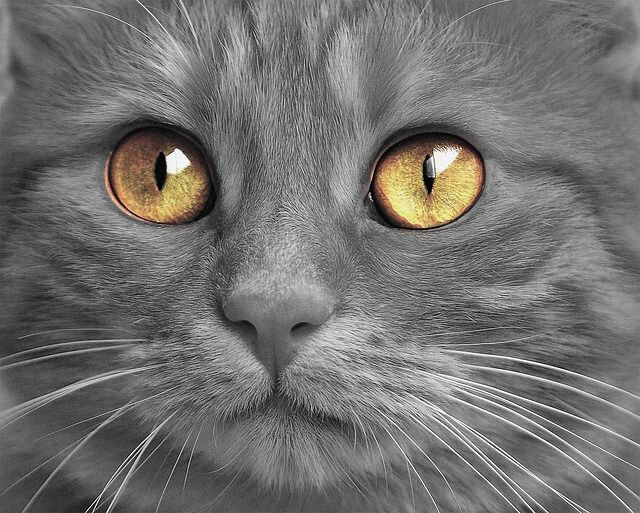 Got yourself a little grey kitty? Lucky you! Do you think