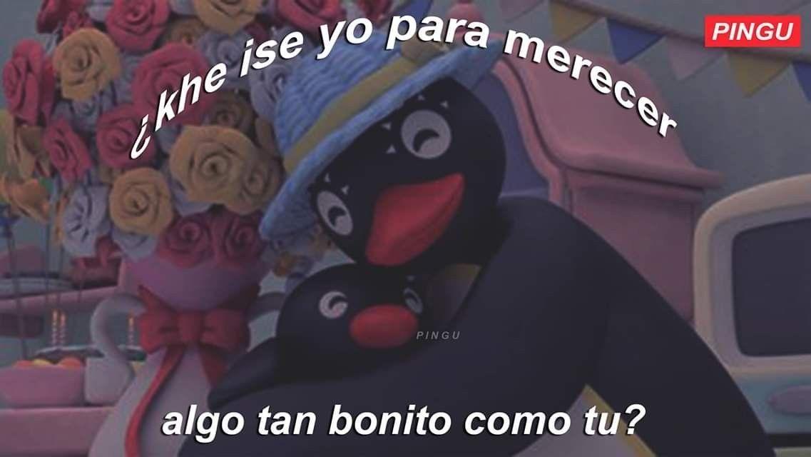Memes Del Pinguino Noot Noot Detodo De Todo Amreading
