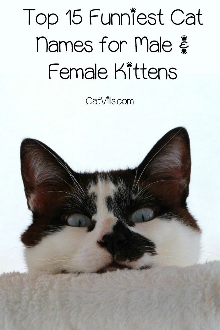 Top 15 Funniest Cat Names for Male & Female Kittens